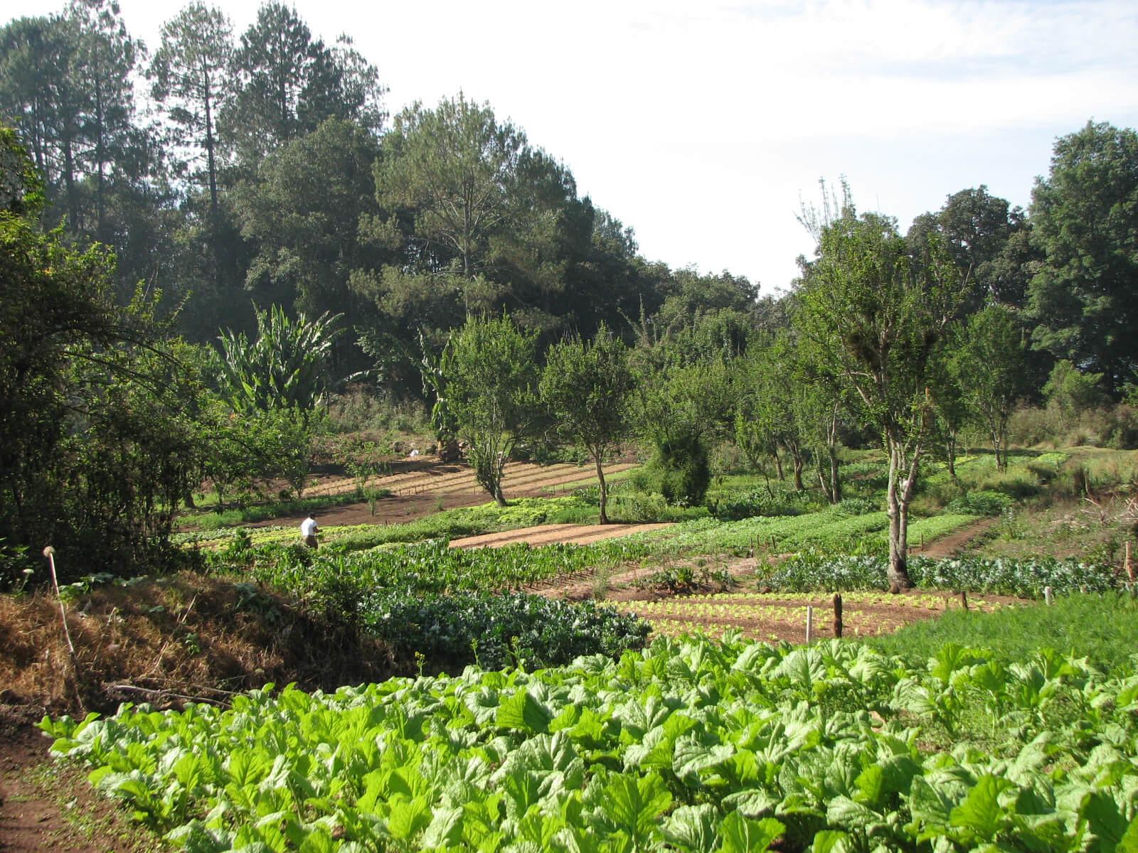 Diverse_organic_farm__near_San_Cristobal_de_las_Casas__2007.jpg