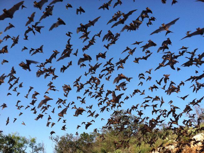 bats10.29.15.jpg