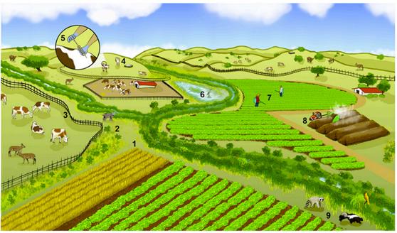 fs-PNAS_study_farm_image.jpg