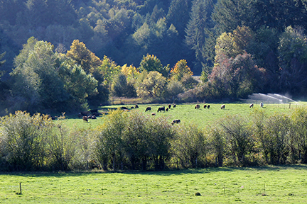 Winter_Green_cattle_and_riparian_area1.jpg