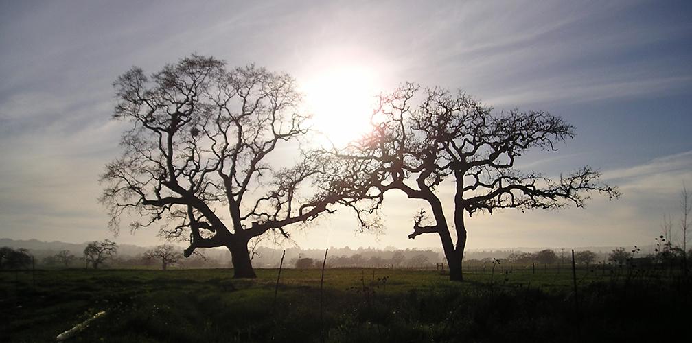 Quezal_farm_oaks_J.Baumgartner.jpg