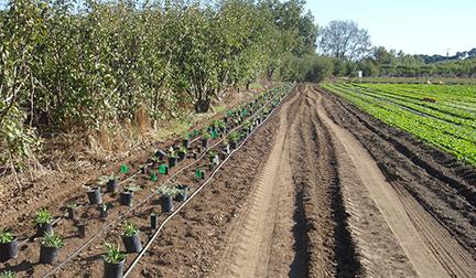 Live_Earth_Hedgerow_Planting.jpg