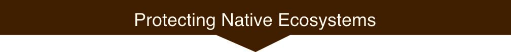 ProtectingNativeEcosystemsArrowMed.jpg