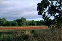 Buchanan_Wetland.jpg