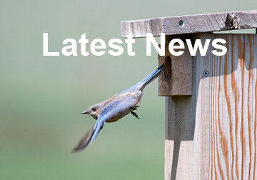 BluebirdLatestNews.png