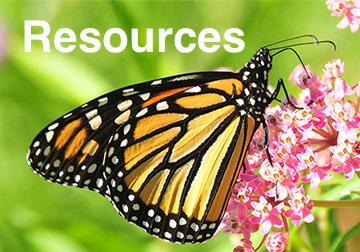 Monarch.USFWS3.jpg