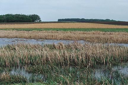 Wetland_NRCSSD01004.jpg