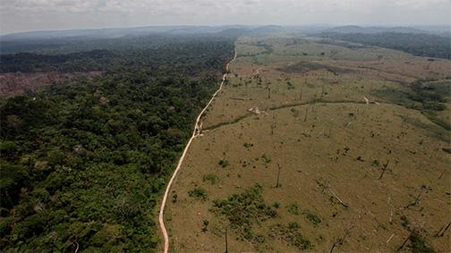 Rainforest_destruction.jpg