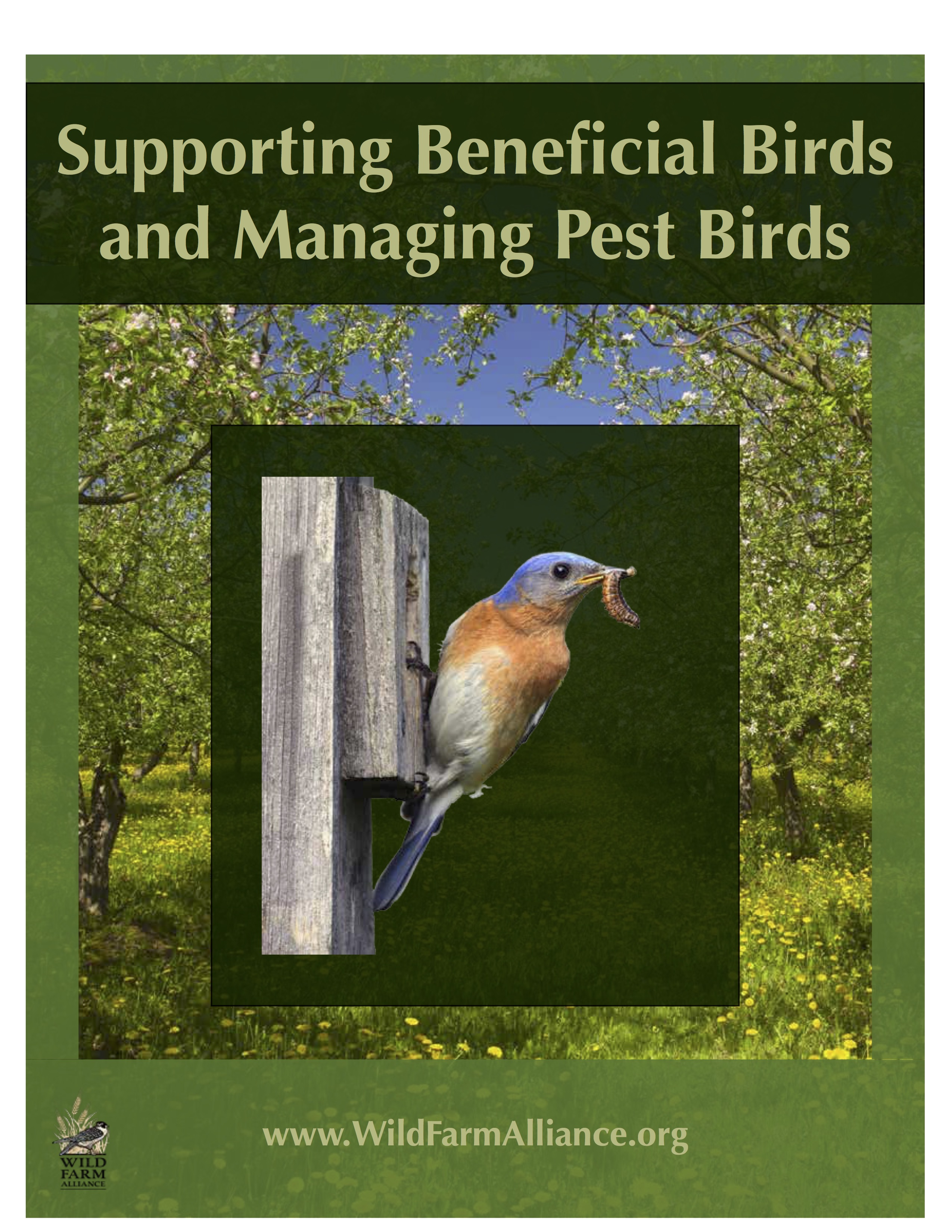 Bird_Guide_Cover_Image.jpg