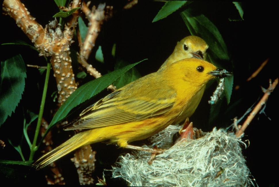 birds6.9.15.jpg