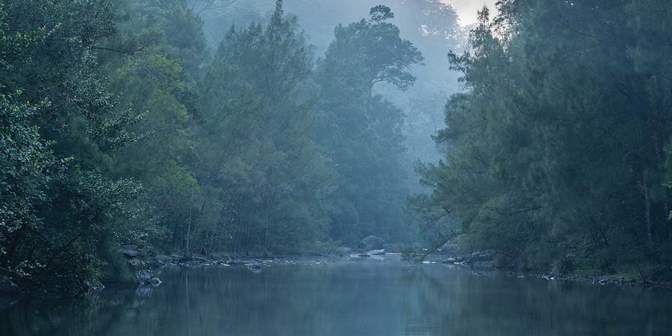 Three important landmark conservation decisions turn twenty this year