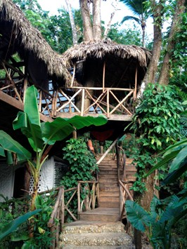 Dominican Tree House