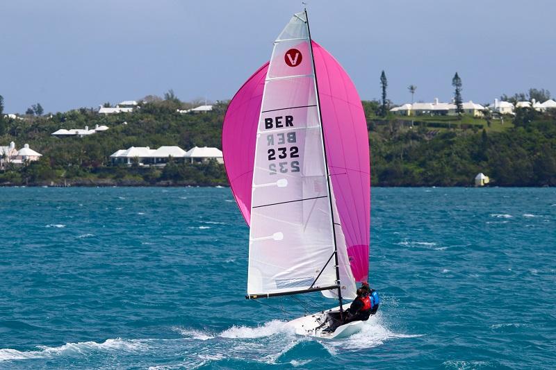 Viper Bermuda Aspen