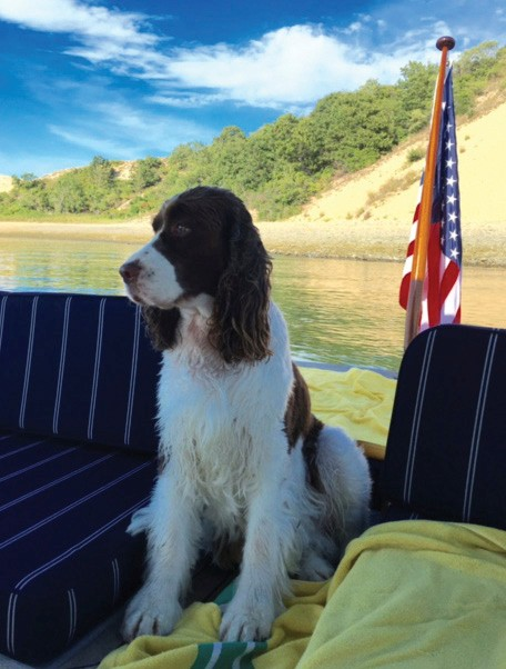 Dog safety at sea