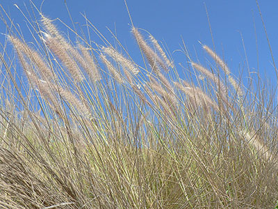 Windspiration