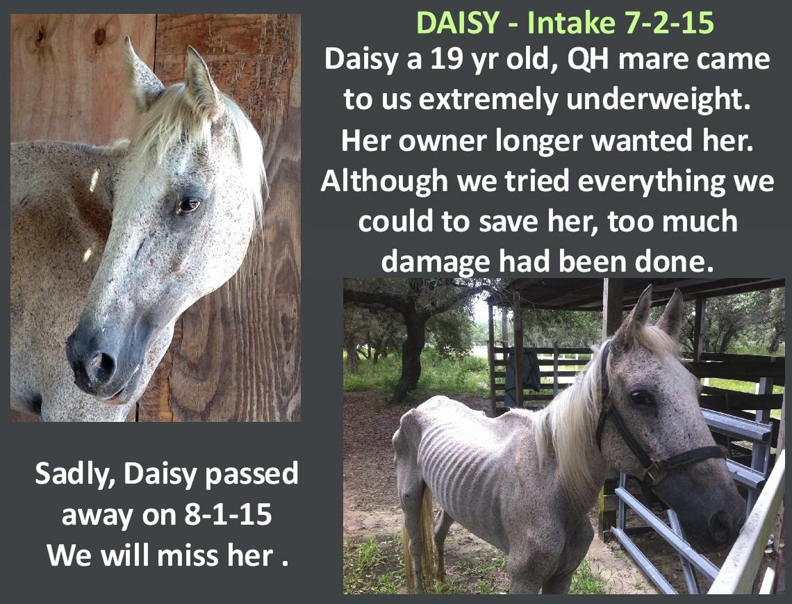 Daisy_-_jpg.jpg