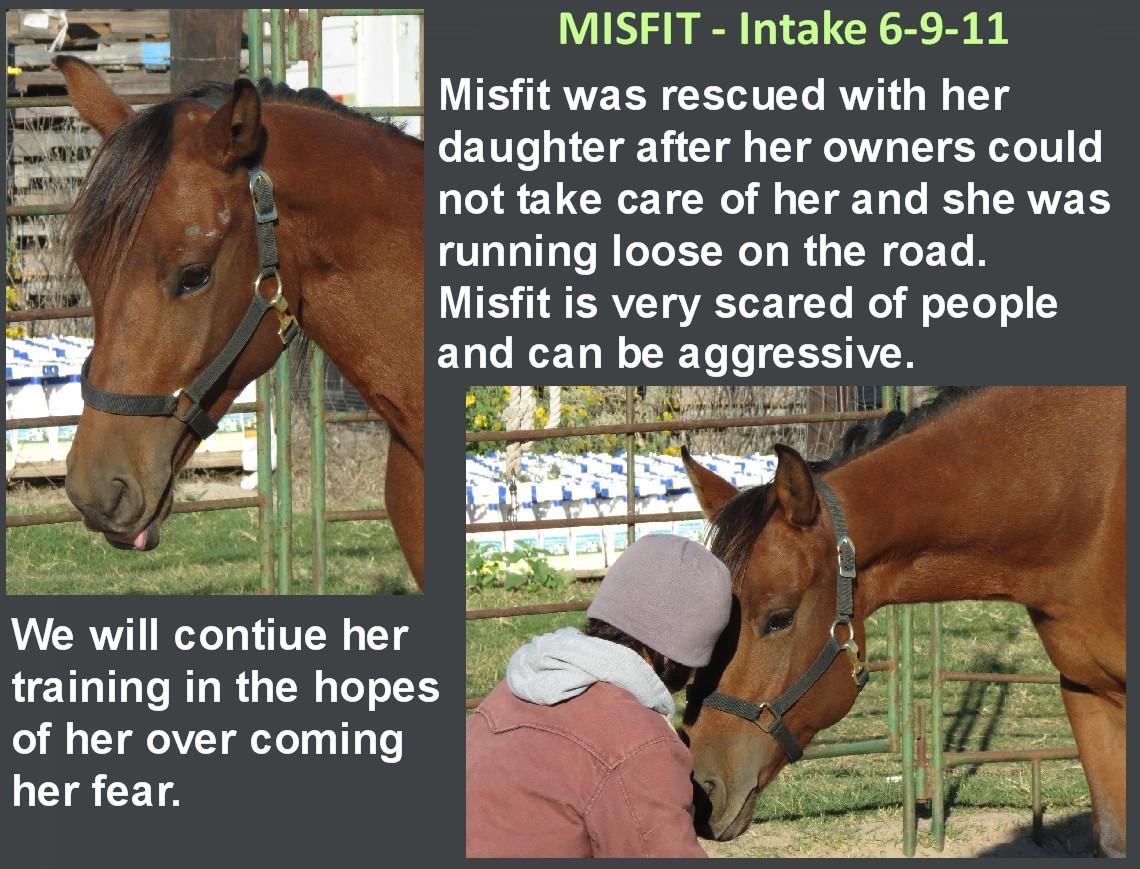 Misfit_-_jpg.jpg