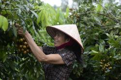 FAO_-_24770_DSC8476_-_Hoang_Dinh_Nam.jpg