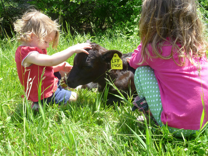 Girls_with_Calf_690_resized.jpg