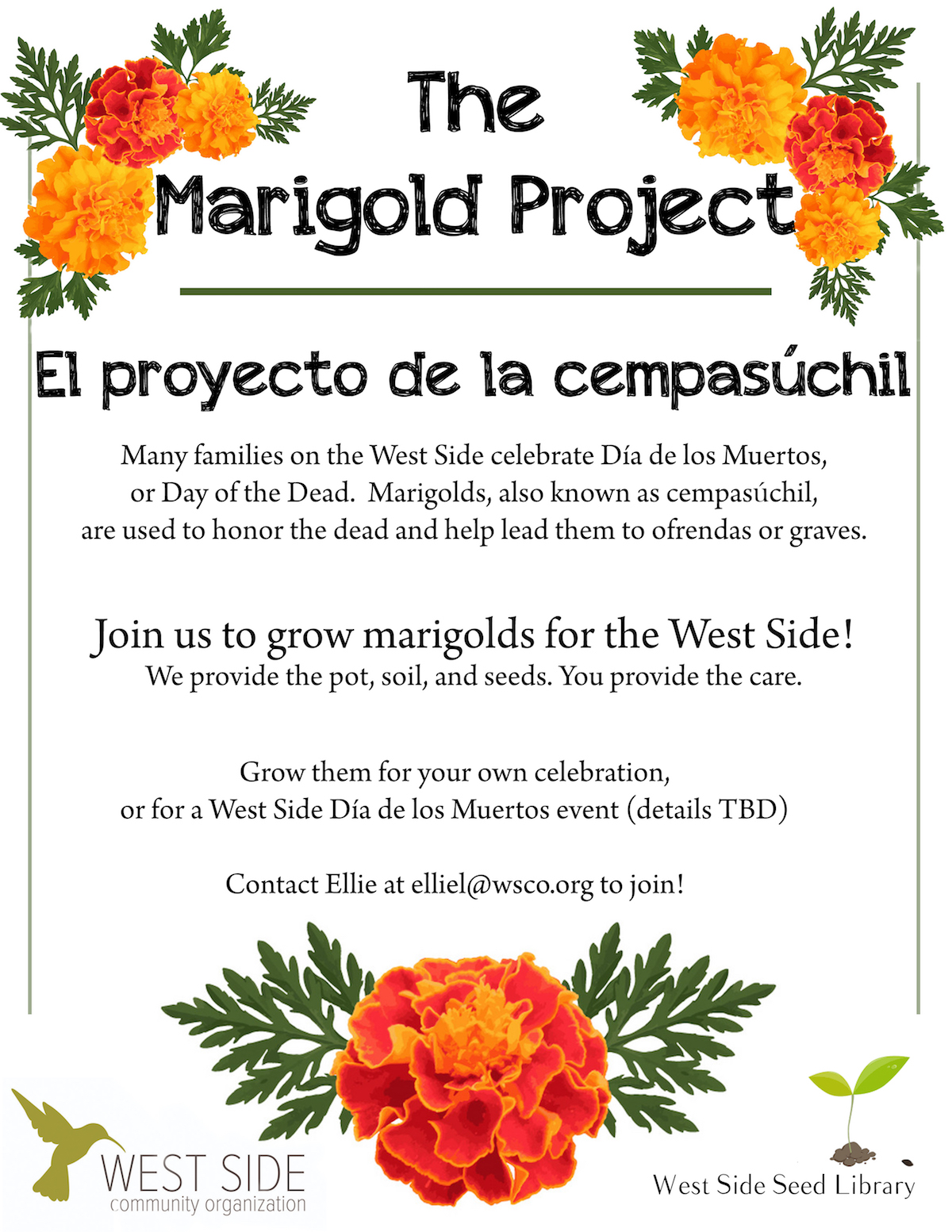 marigold project flyer