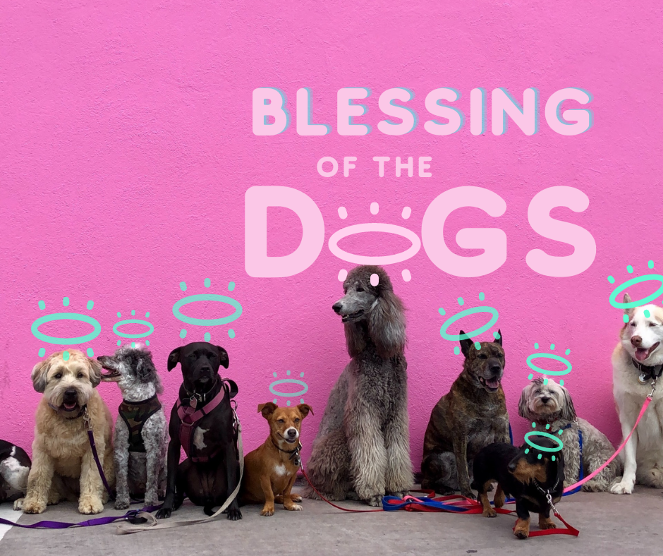 BLESSING OF THE DOGS