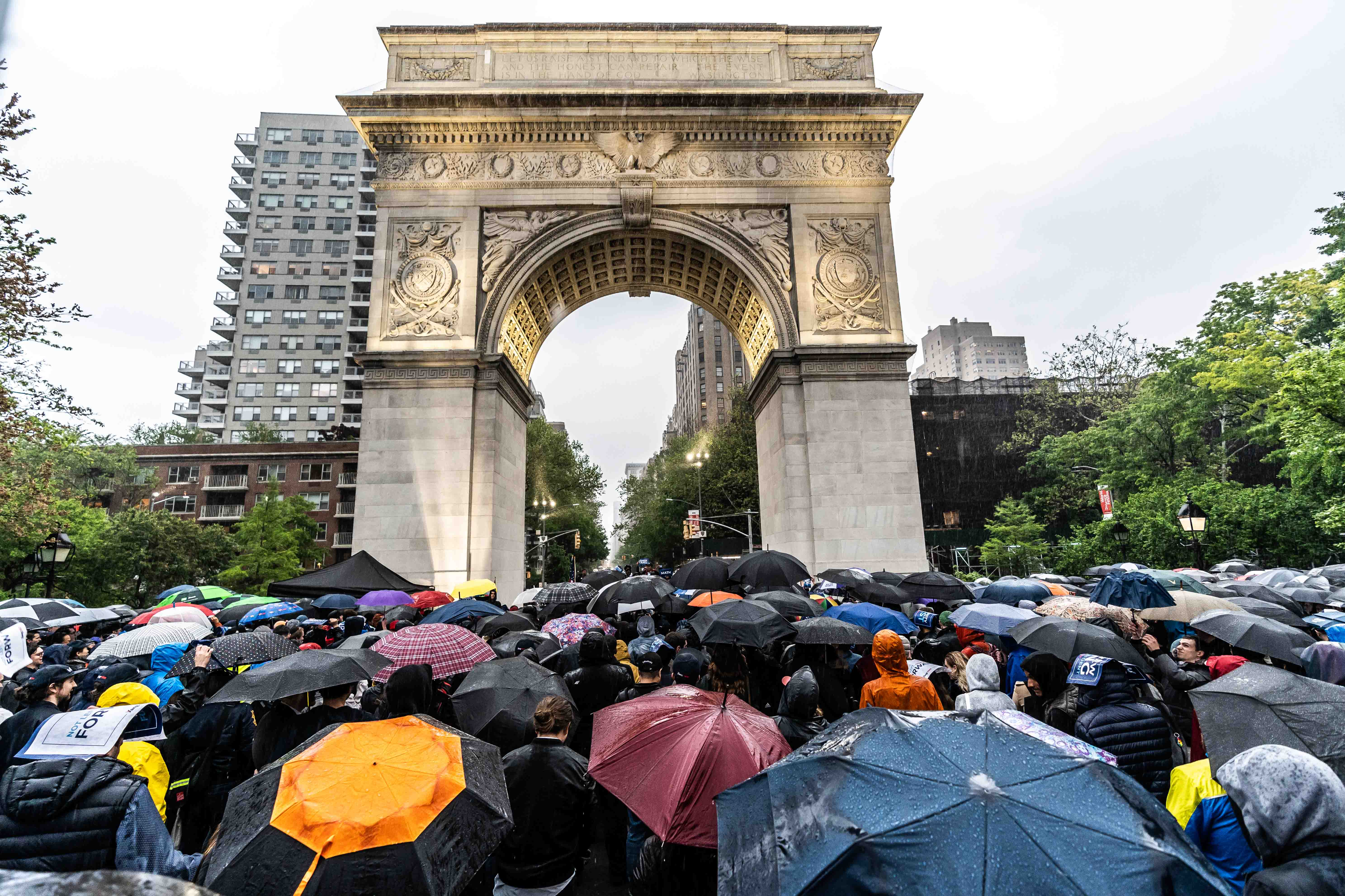 A field of umbrellas stretches across Washington Square Park -  supporters waiting to hear Andrew Yang speak