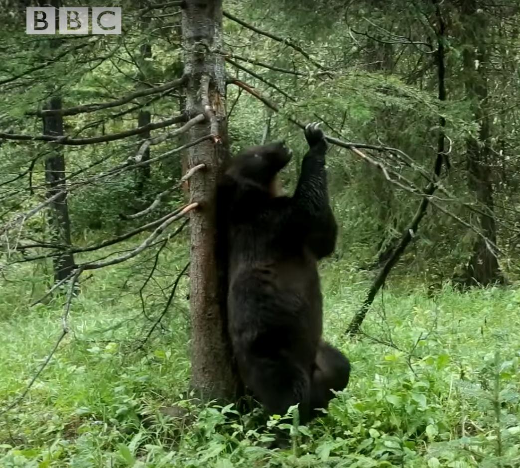bear_rub.png