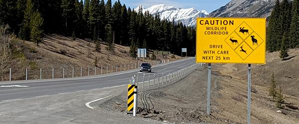 Wildlife signage on Highway 40 in Alberta