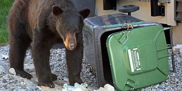 bear_trash_video.png