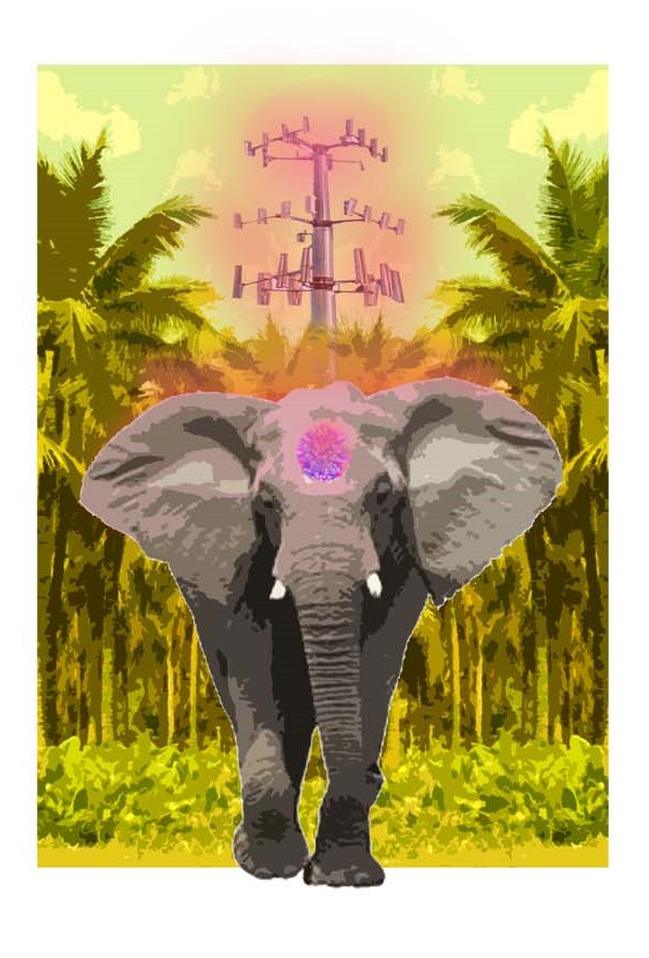 Cam-elephant_in_the_room_FINAL(3)(1).jpg