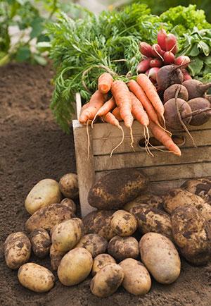 organicfood.jpg