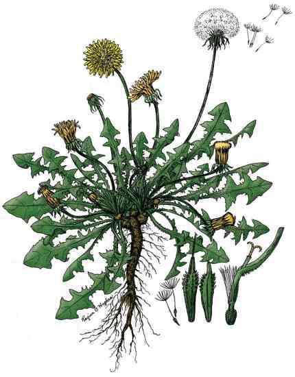10 Alternatives to Roundup Weed Killer
