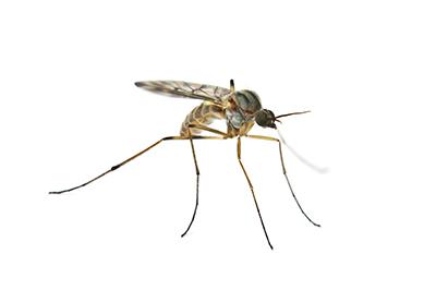 mosquito-PTKDCW3.jpg