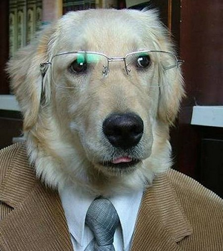 Suit wearing dog