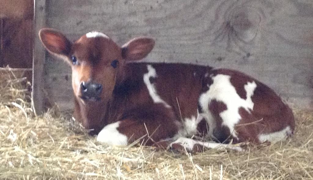 cows_and_kids_(32)sara_sm.jpg