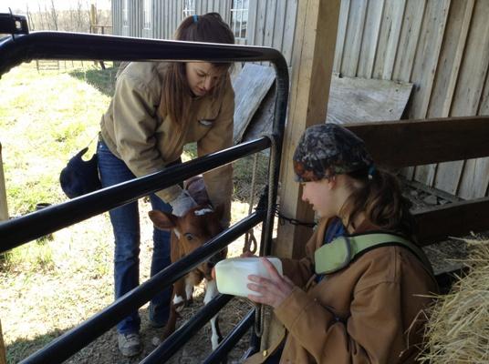 volunteer_feed_bottle_to_rescued_calf_sm.jpg