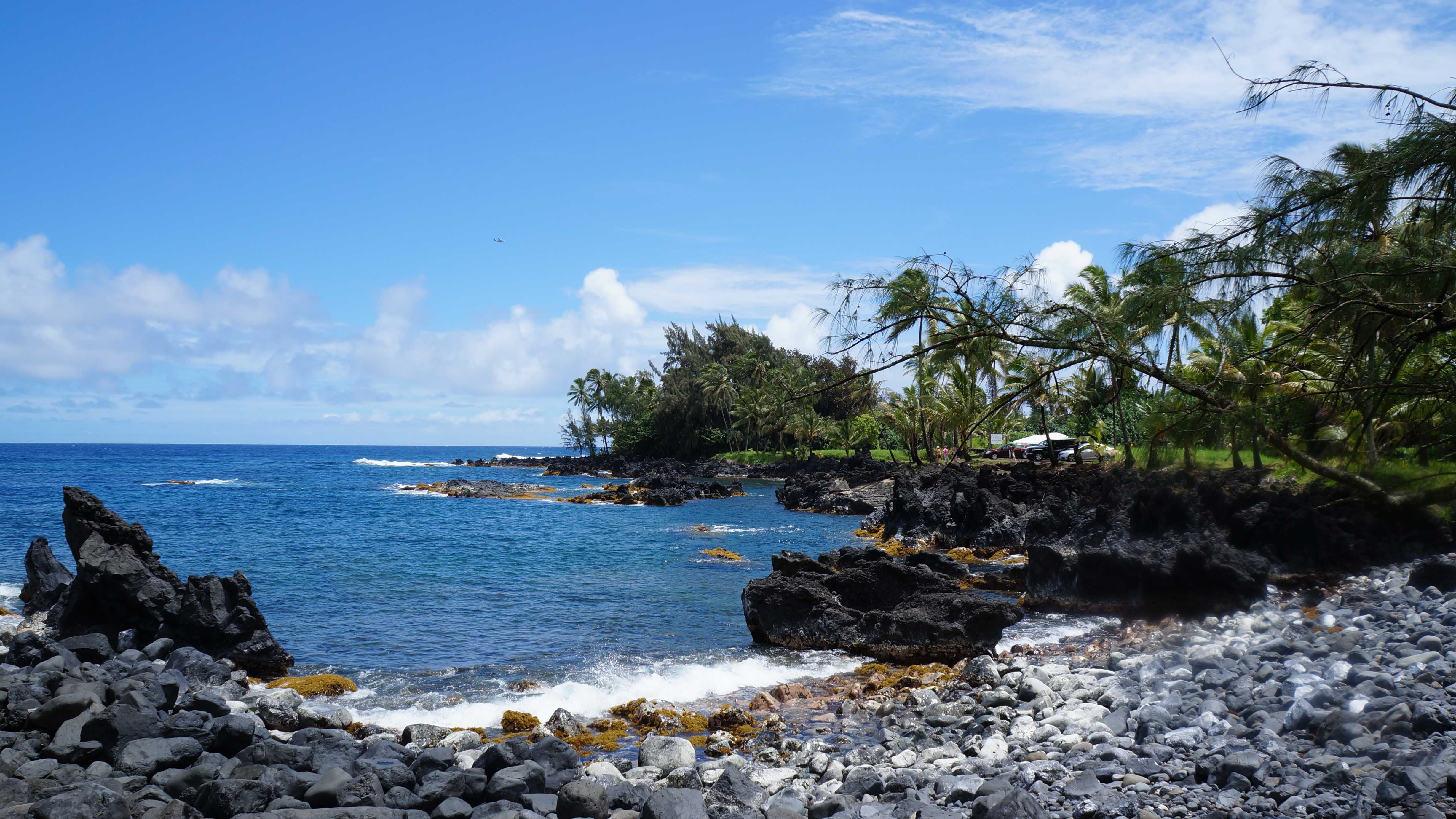 A rocky beach in Hawaii with palm trees and blue skies
