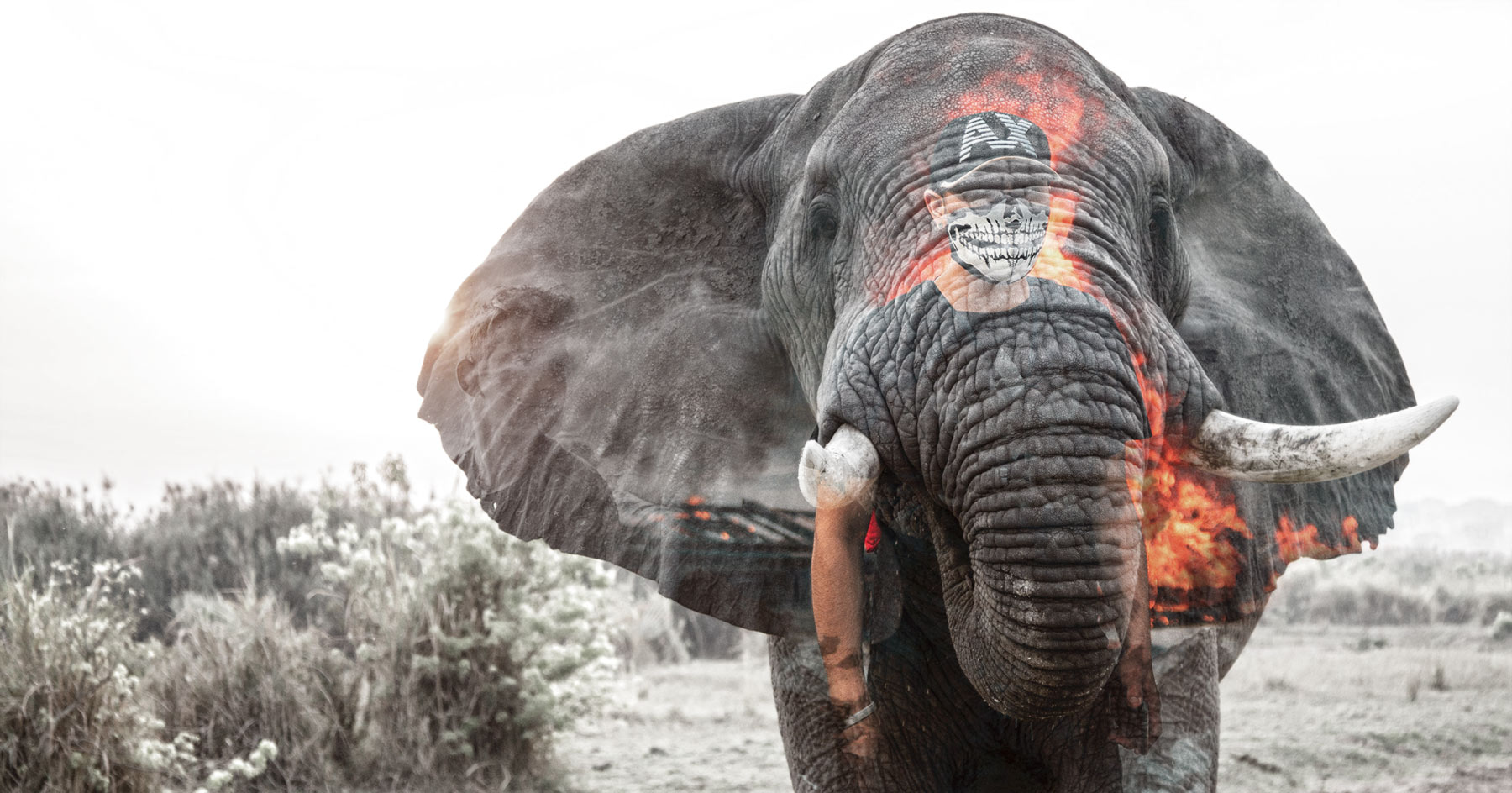 Elephants and Young Men: Toxic Masculinity in the Animal Kingdom?