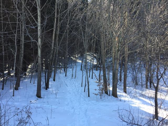 snowy_forest_trail.jpg
