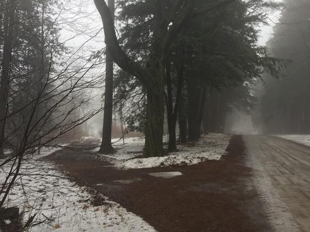 two_trails_LSG.jpg