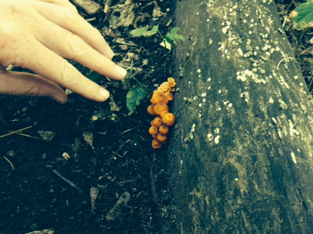 miniature_orange_mushrooms.JPG