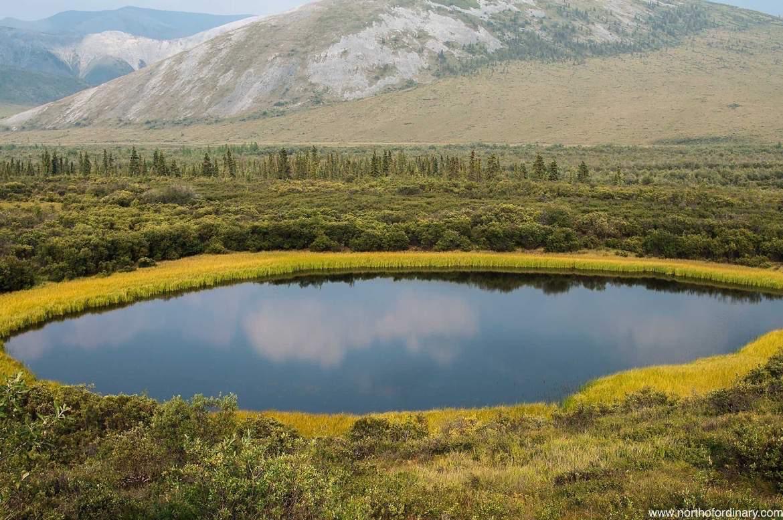 gold-circle-pond.jpg