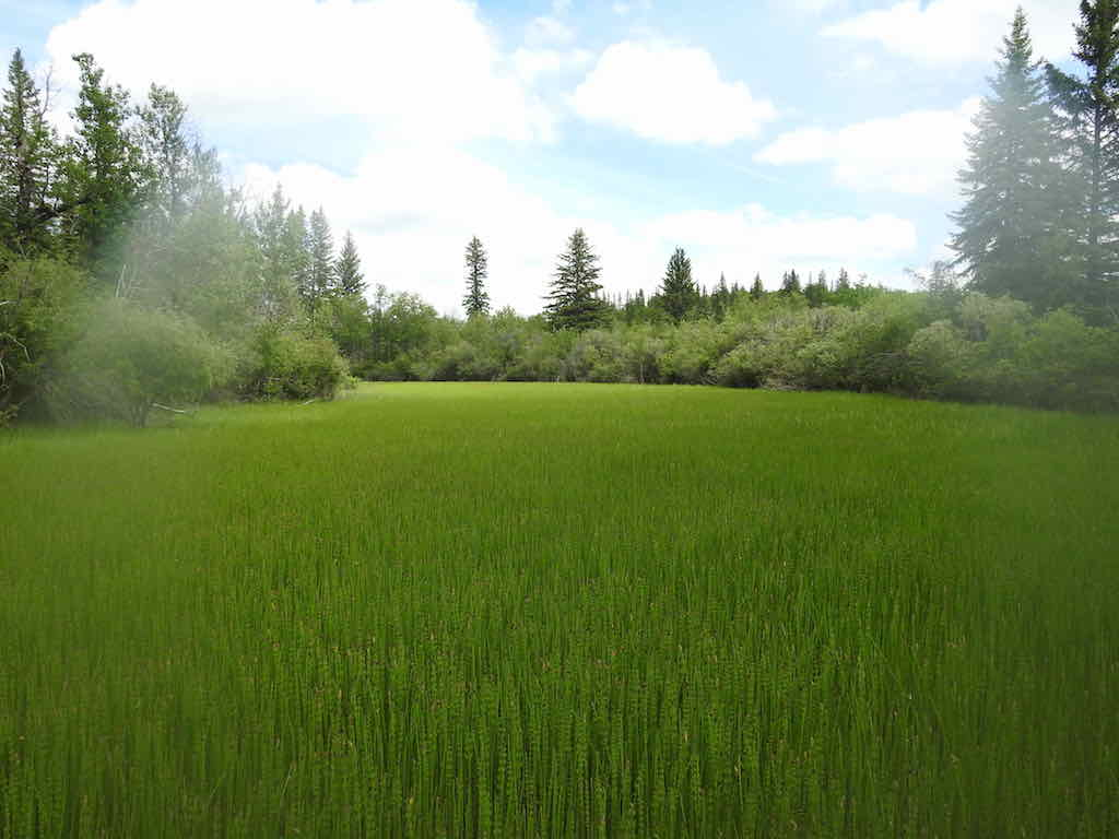 June_18_Weaselhead!-Park_Wetland_At_Potential_Risk_copy.jpg