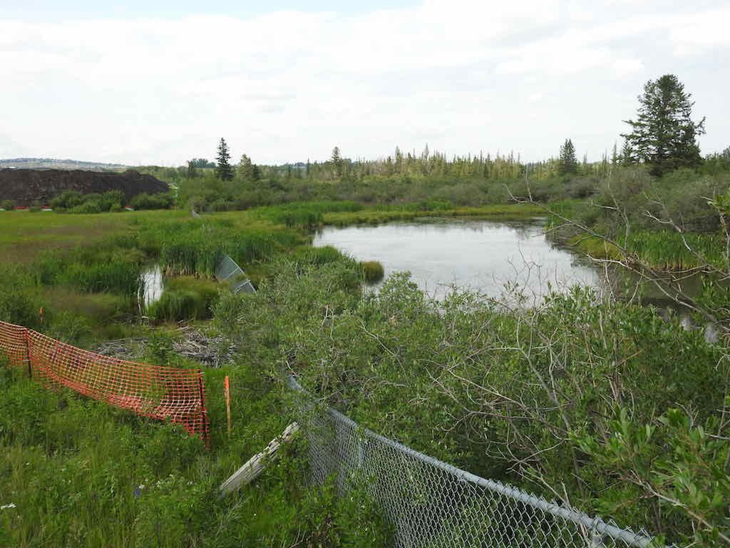 W06_TUC___Beaver_Pond_Looking_North_E_July_11_2017_.jpg